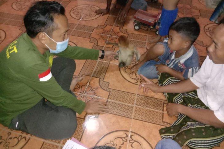 Tabalong KPH evacuates a proboscis monkey kid