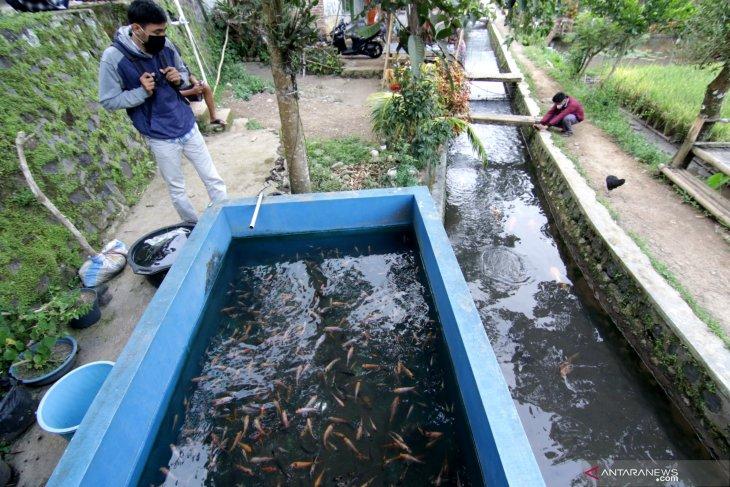 Budidaya ikan di bantaran sungai