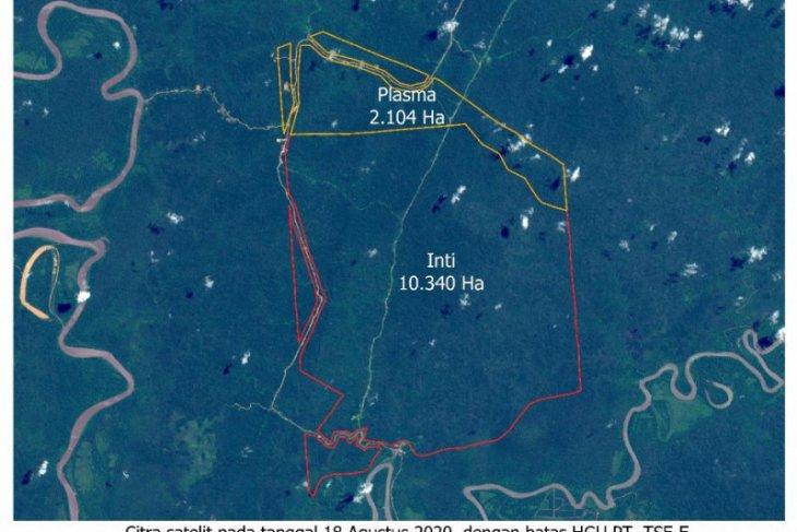 Korindo Group bantah lbakar lahan untuk sawit di Papua