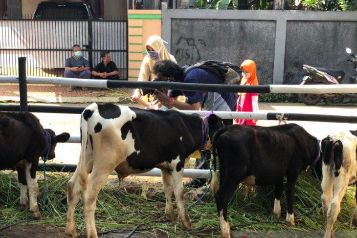 Cipayung memiliki ekowisata edukasi sapi perah