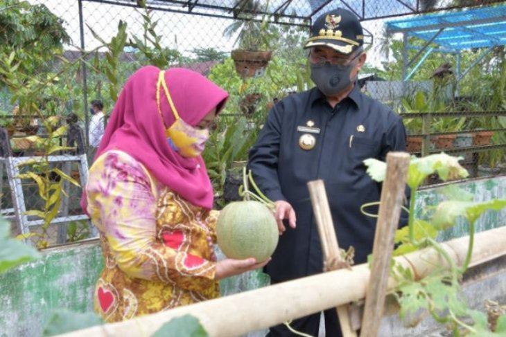 Bupati dan Wabup HSS panen buah di kebun PKK