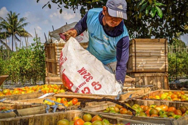 DPMPD Kaltim Fasilitasi Pengembangan Kawasan Agrowisata Perdesaan
