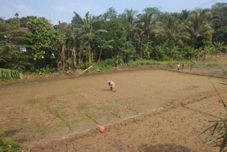 Distan Banten tambah realokasi pupuk bersubsidi ke sejumlah daerah