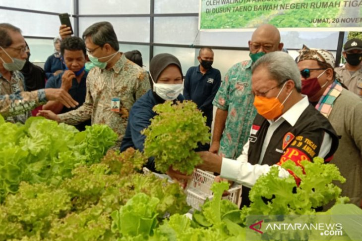 Pemkot Ambon imbau masyarakat manfaatkan pekarangan kembangkan tanaman hidroponik