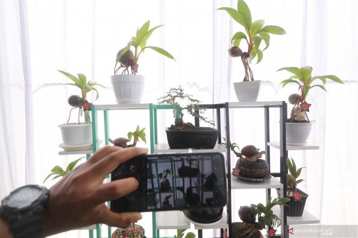 Permintaan tanaman hias di perkotaan