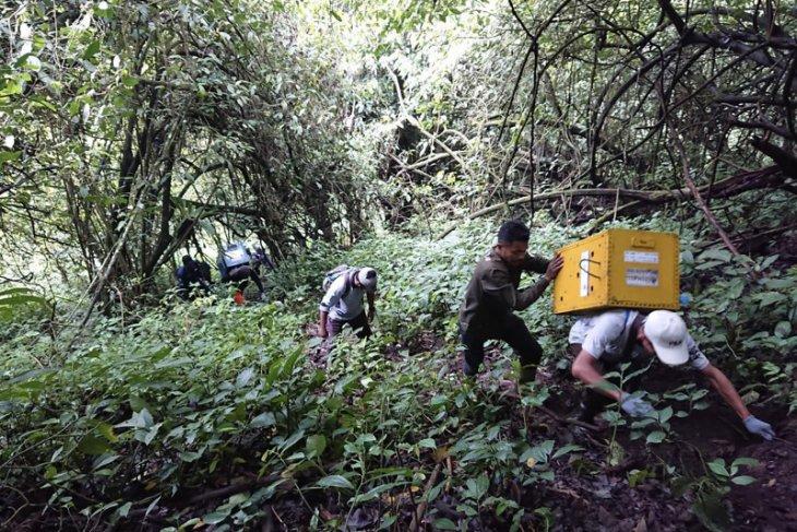 Tujuh ekor lutung Jawa dilepasliarkan