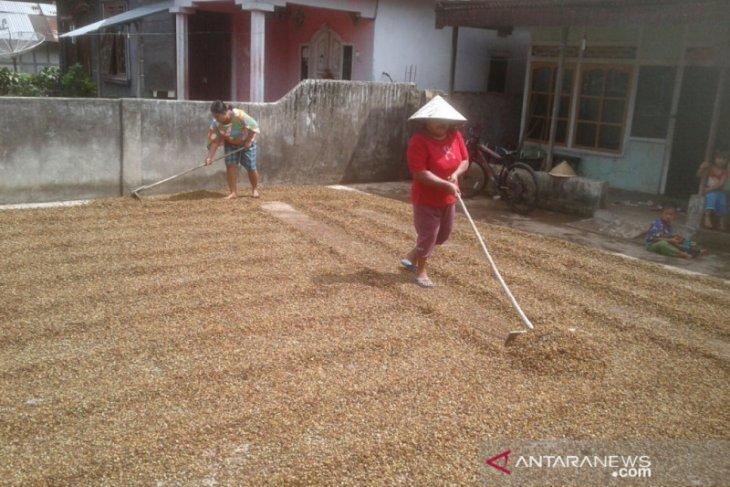 Lima kecamatan di Rejang Lebong  kembangkan tanaman kopi arabika