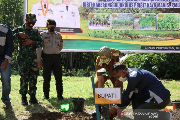 Bupati HSS tanam perdana Aren Genjah di Jambu Hulu, Padang Batung
