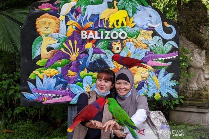 Bali Zoo kembali bangkit di tengah pandemi
