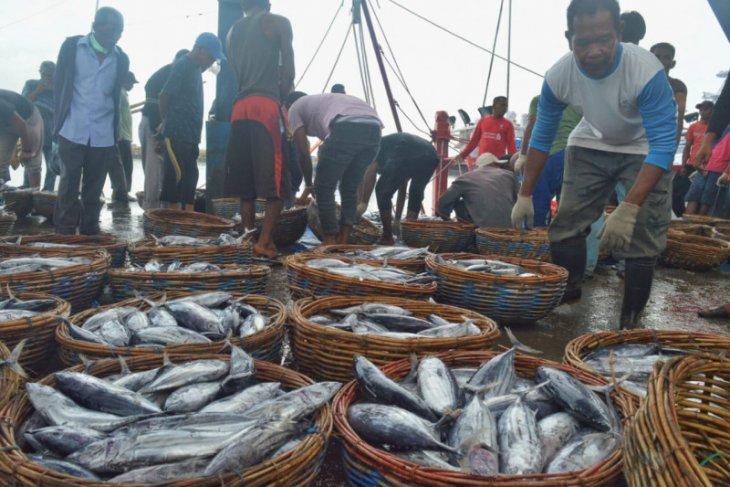 Harga ikan tongkol anjlok