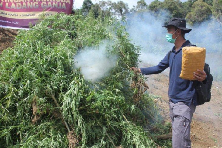 Bareskrim Polri memusnahkan lima hektare ladang ganja di Sumut