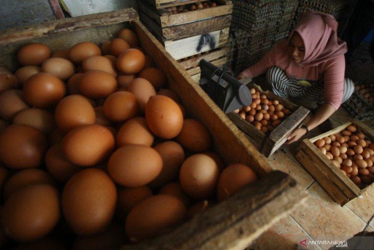 Harga telur ayam ras di Kota Ambon naik