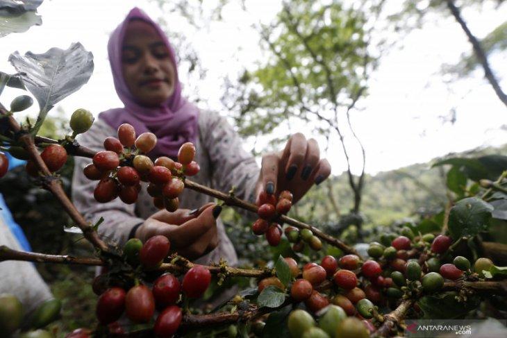 Ekspor kopi Sumut pada 2020 turun