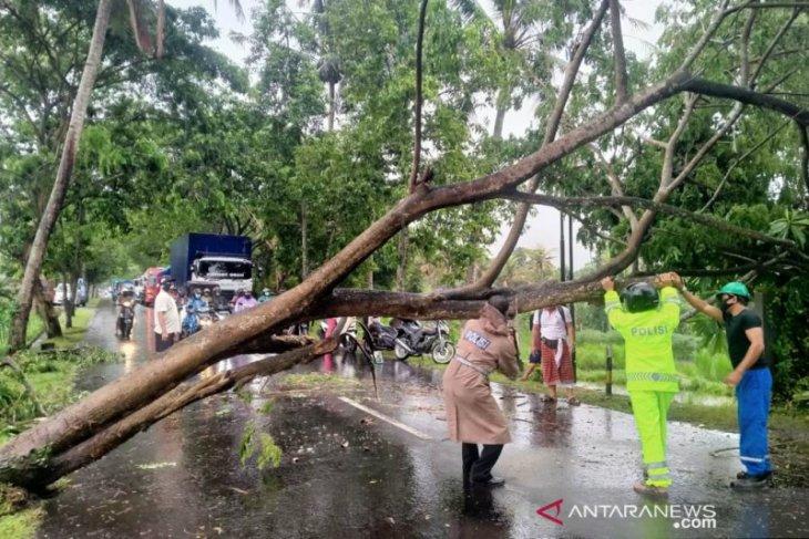 Polisi - Pemkab Bangli singkirkan pohon tumbang