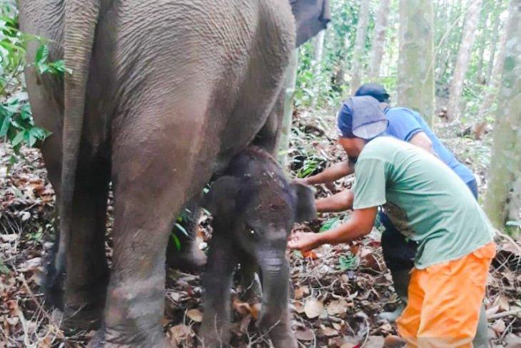 Nama bayi gajah Lisa tak sembarangan, menunggu nama dari pejabat