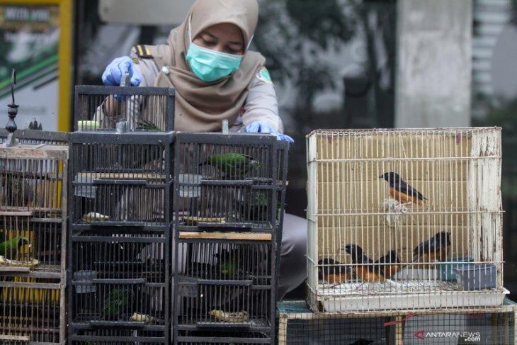 Pengiriman ratusan burung berkicau ilegal asal Balikpapan digagalkan