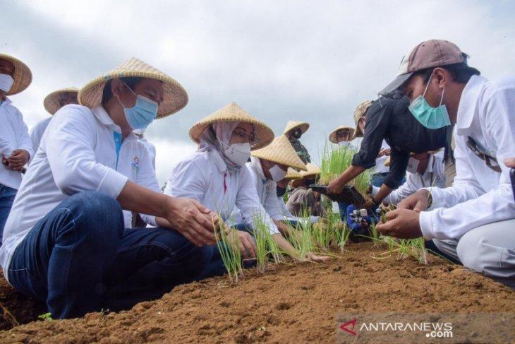 Kembangkan bawang merah, Pemkab Purwakarta siapkan lahan seluas 30 hektare