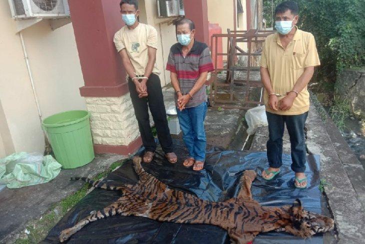 Polda Bengkulu tangkap jaringan penjualan harimau sumatera