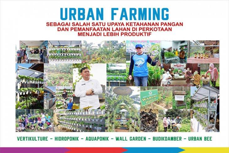 Mengembangkan Urban Farming dengan Bogor Berkebun