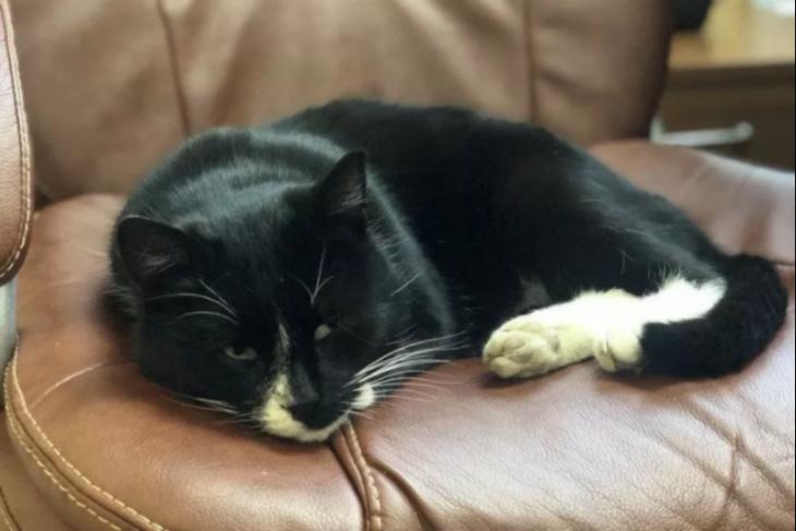 Diselamatkan dari tempat sampah, kucing Rusia nongkrong di kursi menteri