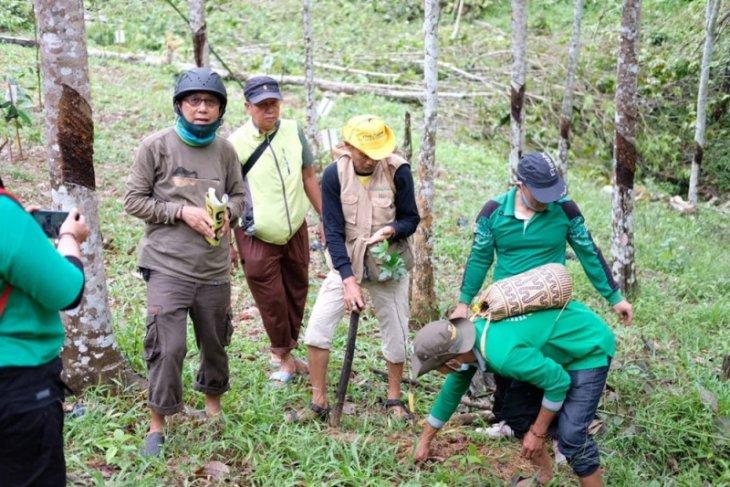 PHD dan FKH kolaborasi tanam pohon di kebun raya Balangan