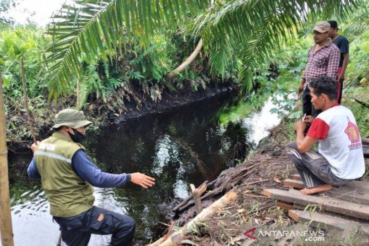 Lagi, Buaya terkam nenek di Sampit hingga tangannya putus
