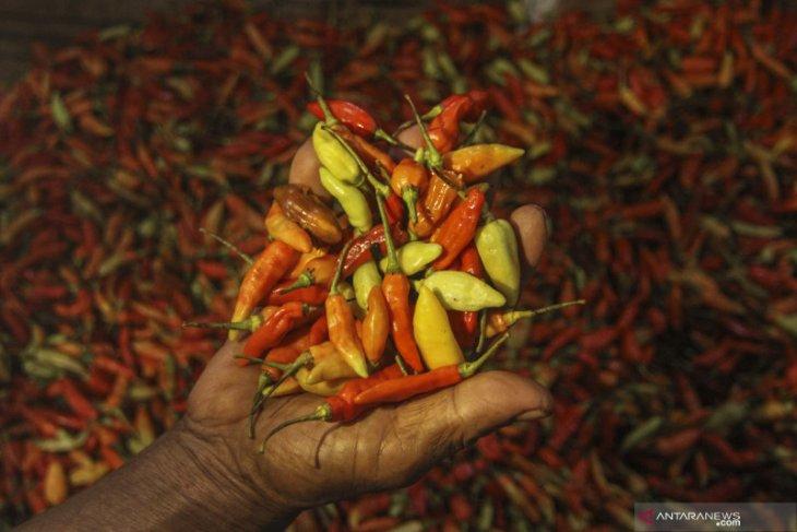 Kapuas Hulu suplai cabai rawit ke dua kabupaten di Kalbar