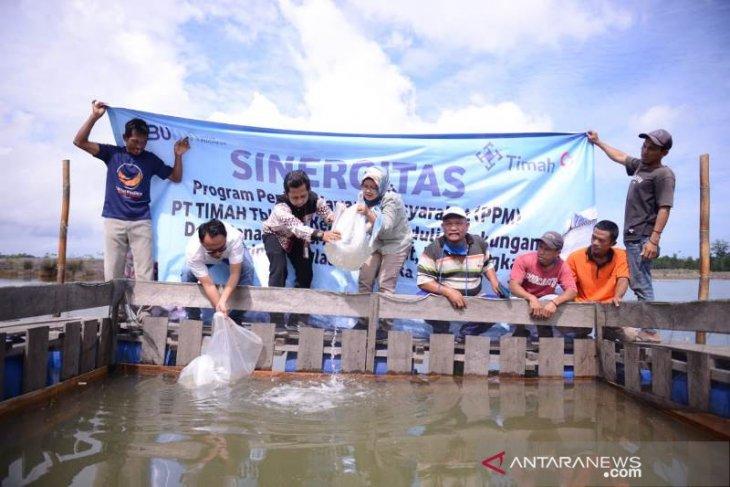Kelompok  Lingkungan Bangka Hijau Sulap Kolong Bekas Tambang Jadi Budidaya Kakap Putih