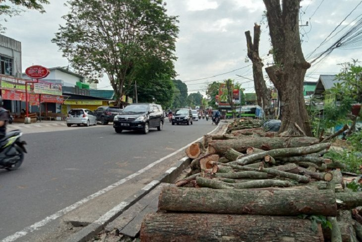 Pohon rindang Jalan Agus Salim dipangkas jauh lebih aman
