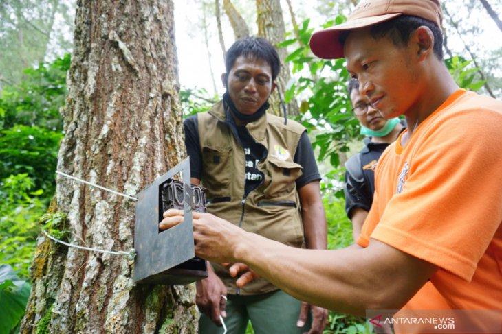 Satwa liar diduga harimau terdeteksi di lereng Gunung Wilis