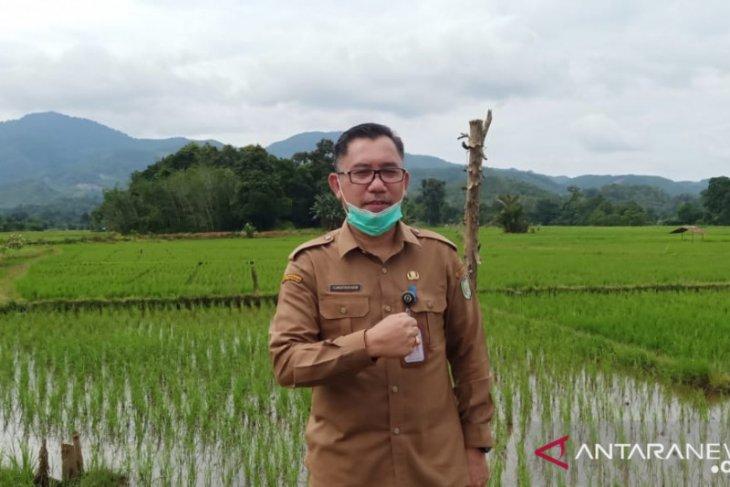 Kalbar tahun 2020 surplus beras 57.227 ton