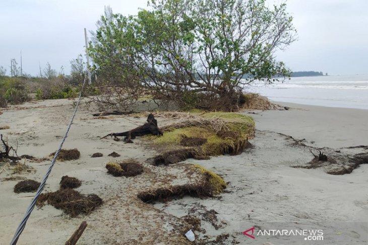 Abrasi Pulau Baai, BKSDA butuh 85 ribu bibit