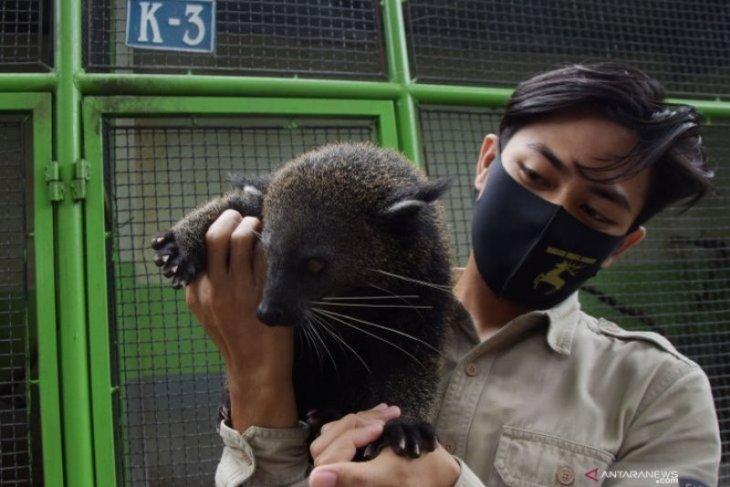 Pemeliharaan satwa koleksi Taman Wisata Umbul Madiun terdampak PPKM