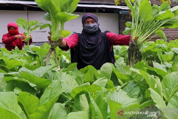 Indocement tingkatkan ekonomi masyarakat lewat pertanian hidroponik