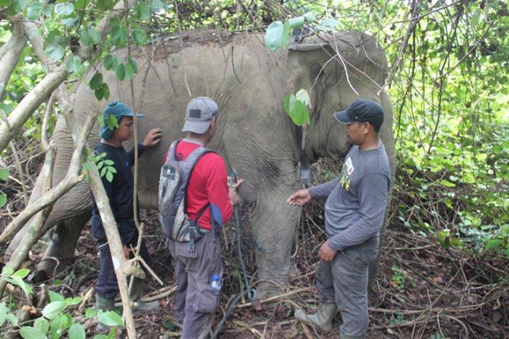 Aktivis sarankan kawasan ekosistem esensial untuk atasi konflik gajah
