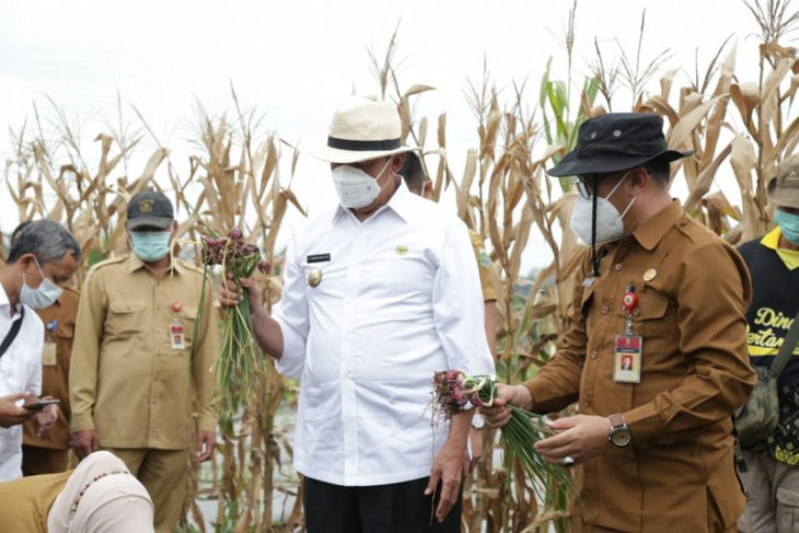 Gubernur Banten bertekad perkuat ketahanan pangan
