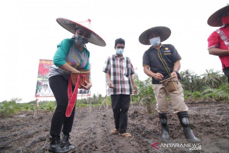Bupati Landak maksimalkan program pertanian dengan peremajaan sawit