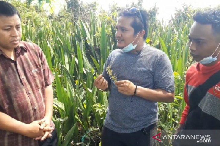 BKSDA jelaskan fenomena bau pandan di Kota Bengkulu