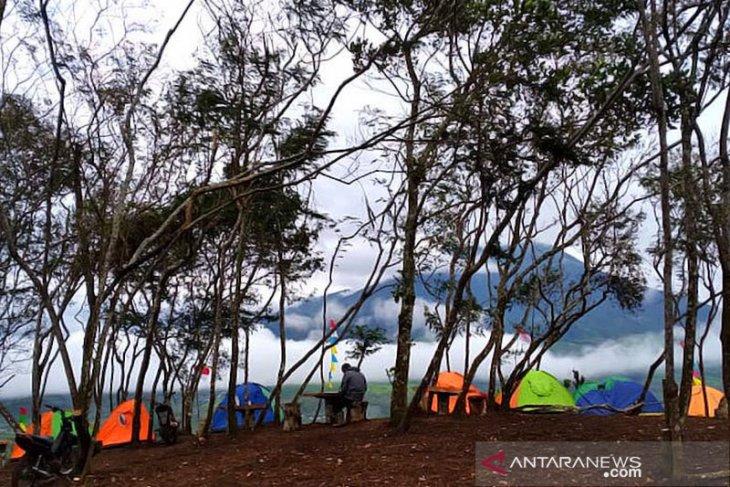 Gara-gara petik tanaman dilindungi, Sekelompok pemuda dilarang daki Gunung Dempo