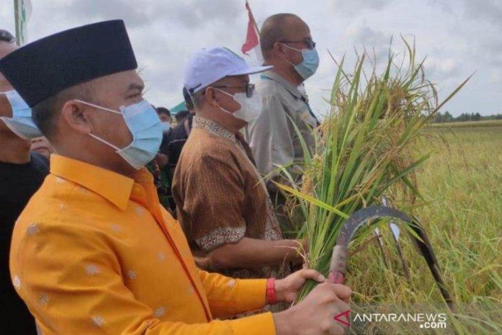 Padi lokal Ringkak Cundong Sambas hasilkan 8 ton per hektare
