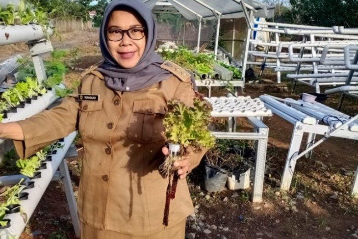 Penyedia sayuran hidroponik kewalahan penuhi kebutuhan konsumen
