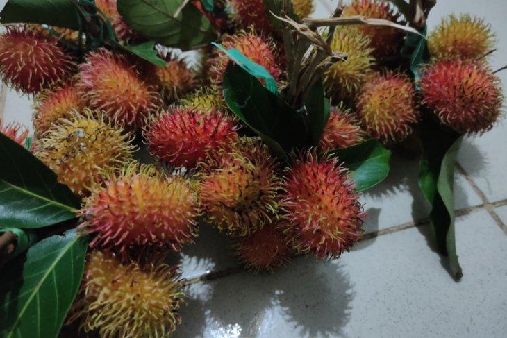 Harga buah rambutan di Banjarmasin masih mahal