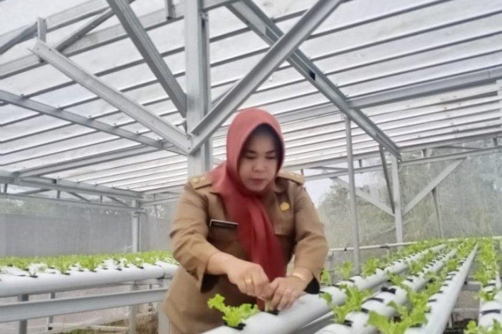 Warga diajak manfaatkan pekarangan dengan tanaman hidroponik
