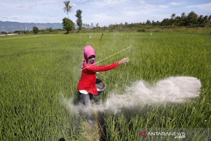 Aceh dapat alokasi pupuk bersubsidi 158 ribu ton pada 2021