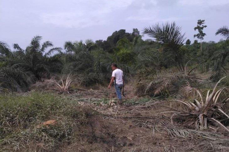 Kawanan gajah ubrak abrik kebun warga di Aceh Timur