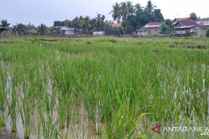 Pemerintah Kota Jambi mendorong petani produksi bibit tanaman unggul