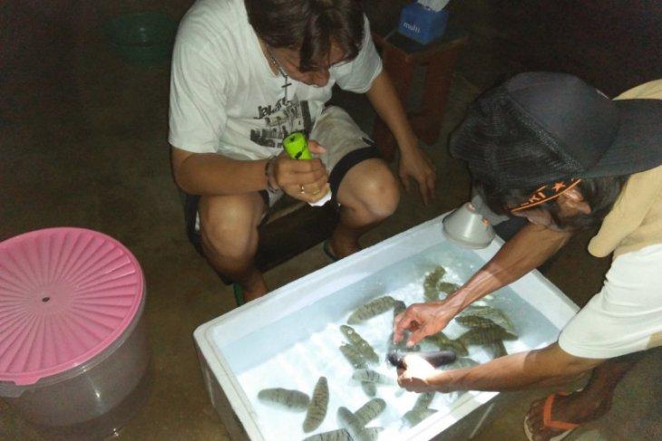 PT.  Pertamina bantu pelestarian teripang di Kepulauan Kei