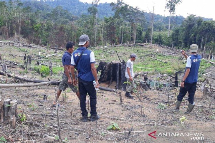 Harimau masuk ladang warga karena habitatnya terganggu pembukaan hutan