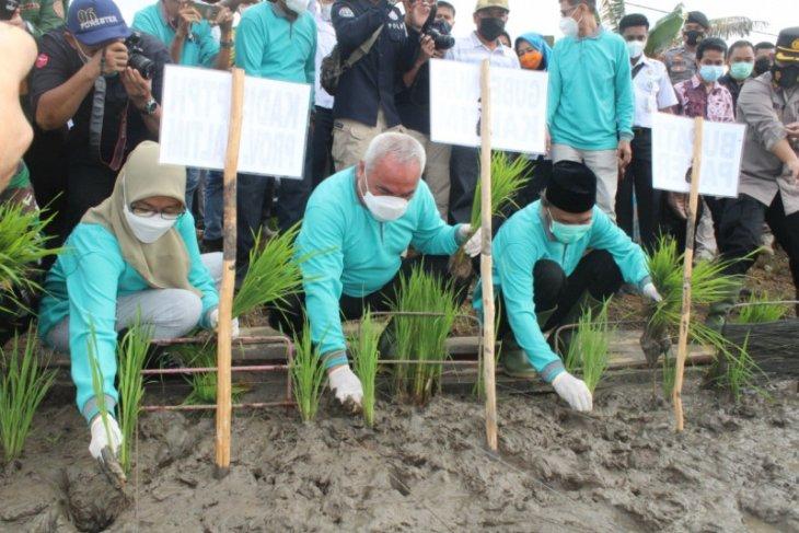 Gubernur Kaltim tanam padi di Desa Sungai Tuak