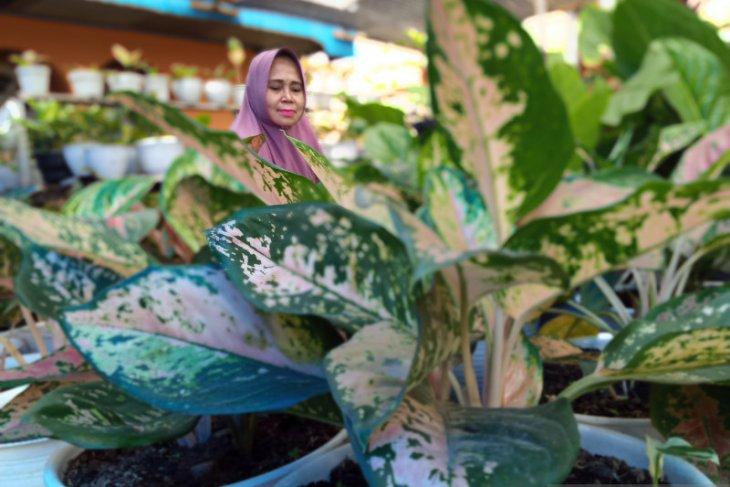 Penjual tanaman hias keluhkan mulai sepi pembeli